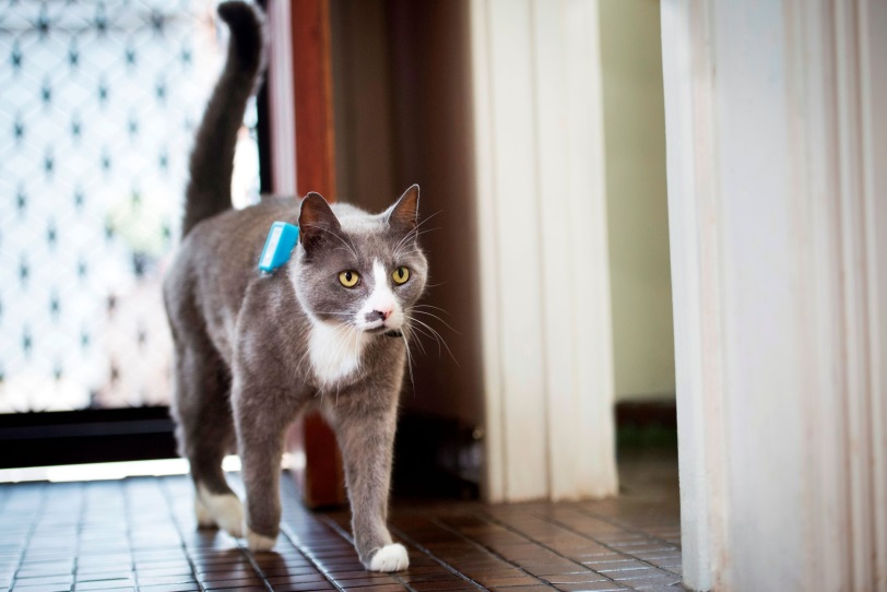 Photo of a cat with a GPS attached to it's collar